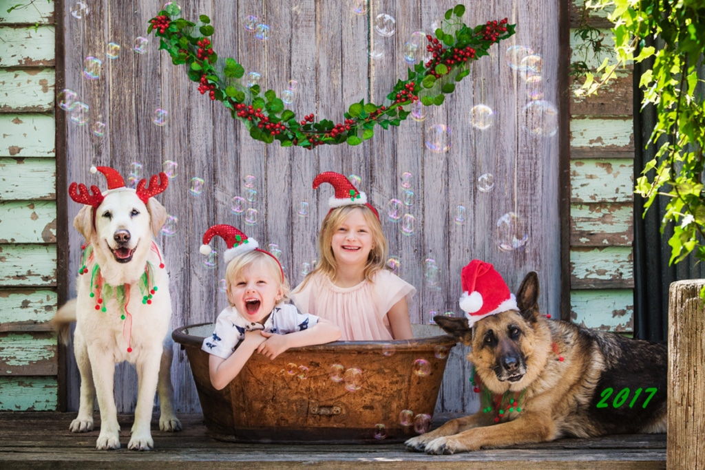 Children and Dogs at Christmas